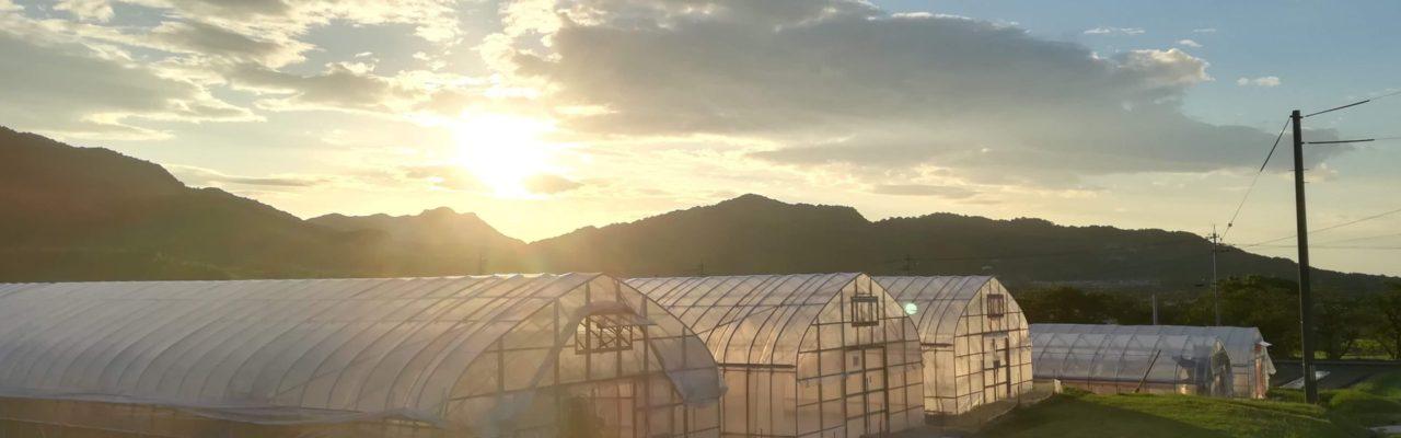 新規就農 野菜とバイク